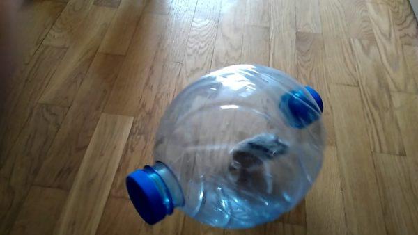 Хомячка можно выгулять в шаре из пластиковой бутылки