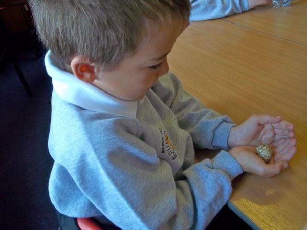 Дети с удовольствием едят перепелиные яйца