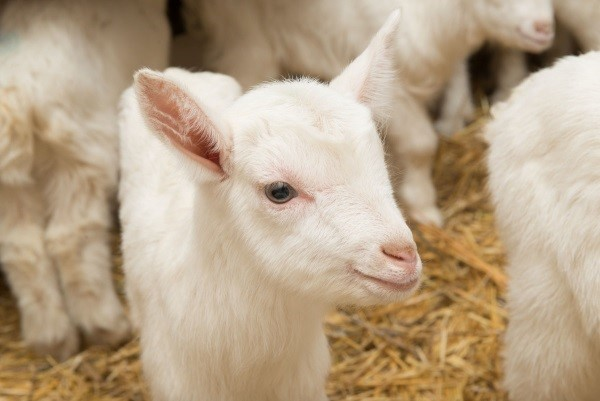 Внешний вид малышей в молочный период