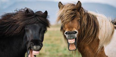 По зубам многое можно сказать о лошади