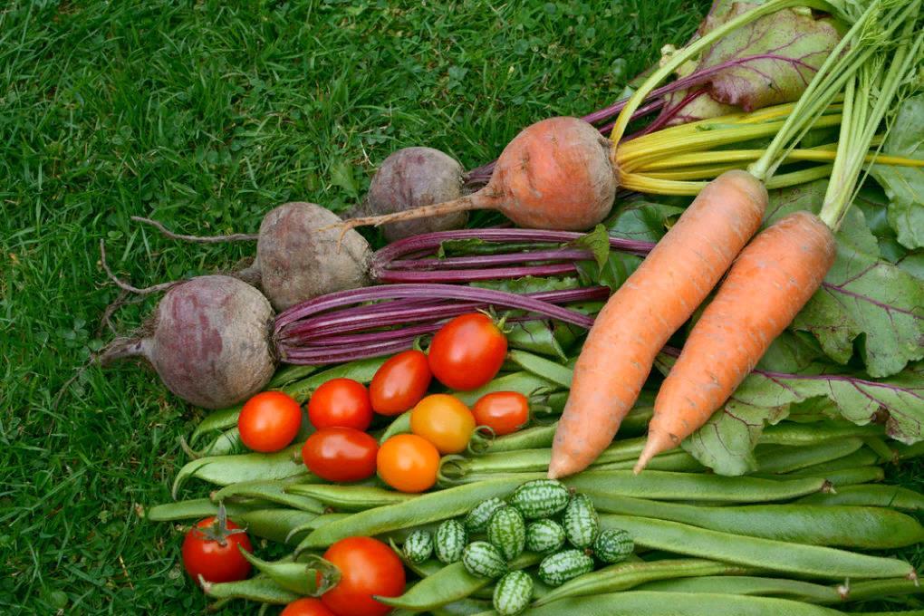 Баранов кормят свежими овощами
