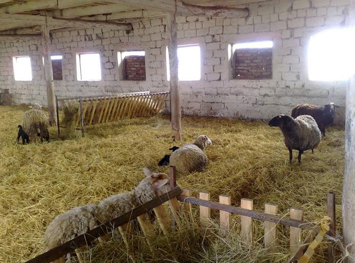 Вариант просторной овчарни