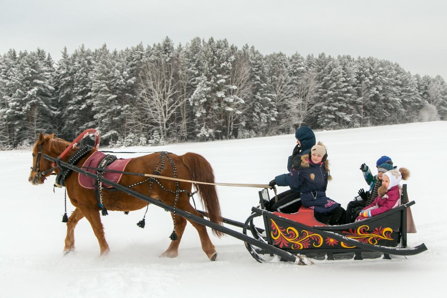 Верховых лошадей используют для упряжки в сани