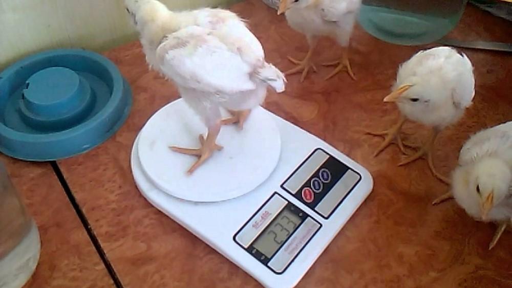 Взвешивание с помощью электронных весов