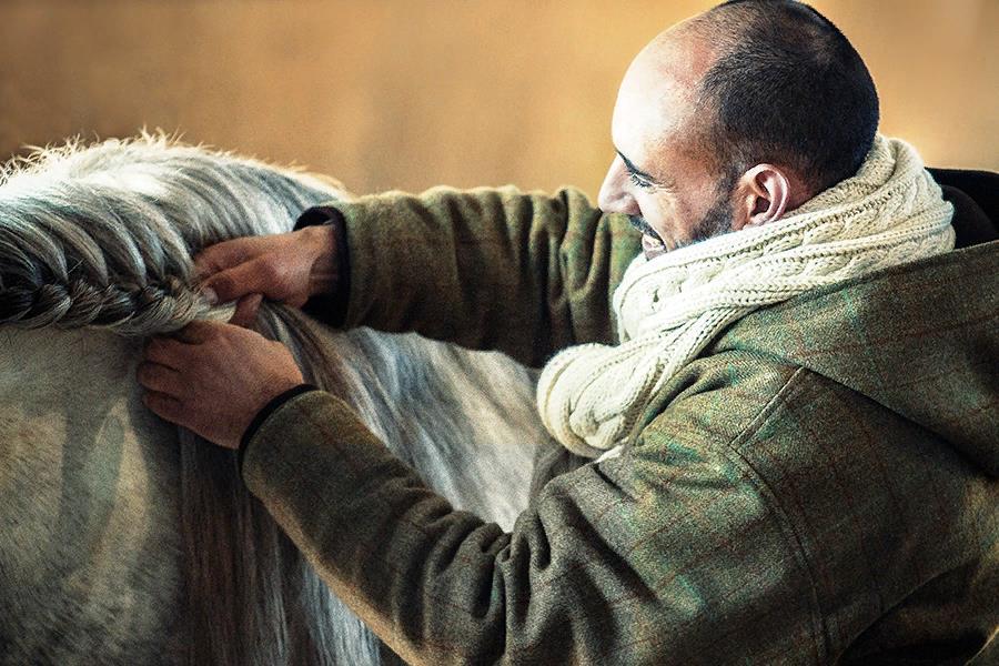 Волосы лошадей можно заплетать в косички