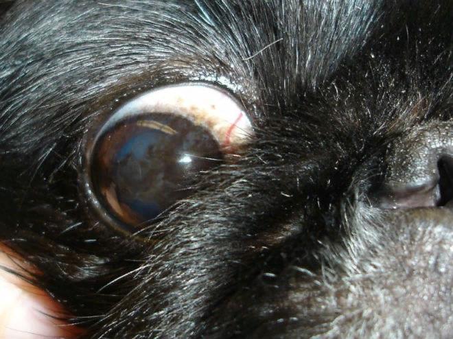 Воспалительный процесс верхней оболочки глаза сопровождается выраженной симптоматикой
