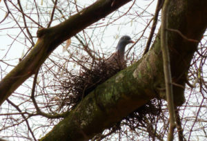 Выбор места для гнездования