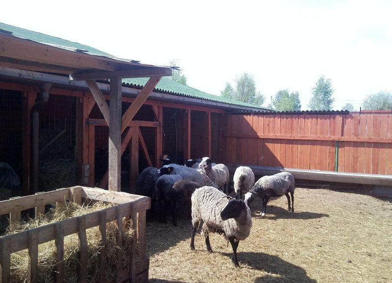 В межсезонье и зимой овцы должны иметь беспрепятственный доступ на улицу