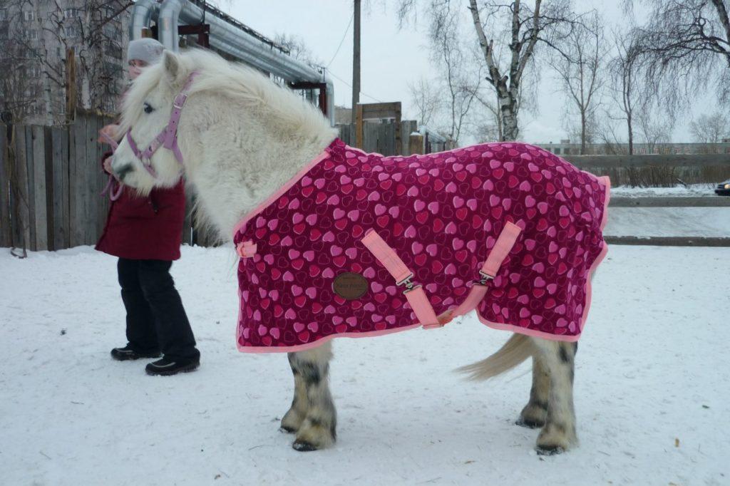 В морозы животных нужно согревать дополнительно