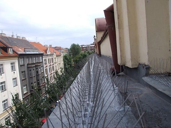 Гибкие ленты с длинными шипами не дают голубям приземлиться на балкон и крышу