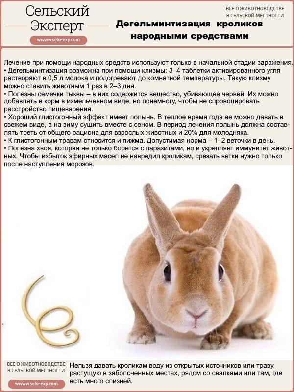 Дегельминтизация кроликов народными средствами