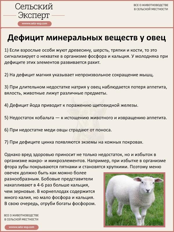 Дефицит минеральных веществ у овец