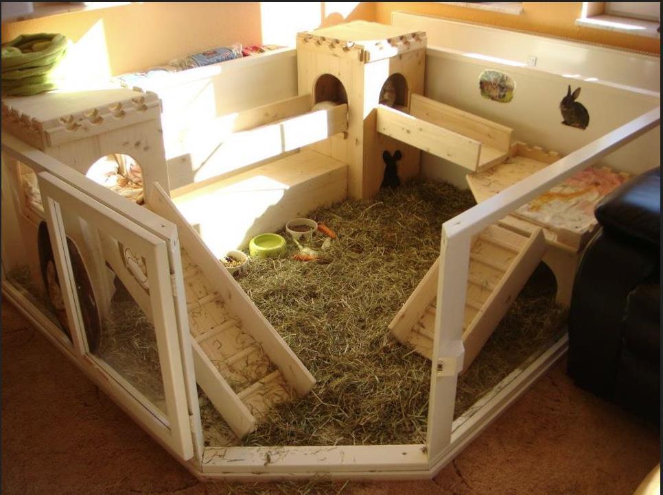 Для декоративного кролика можно создать целый город внутри клетки