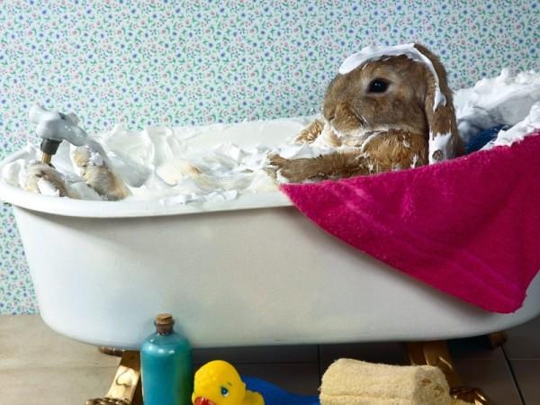 Для шерсти кроликов нельзя использовать обычные шампуни и мыло