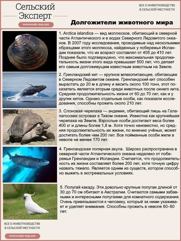 Долгожители животного мира