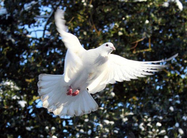 Дыхательная система птиц отлично адаптирована для долгих полетов