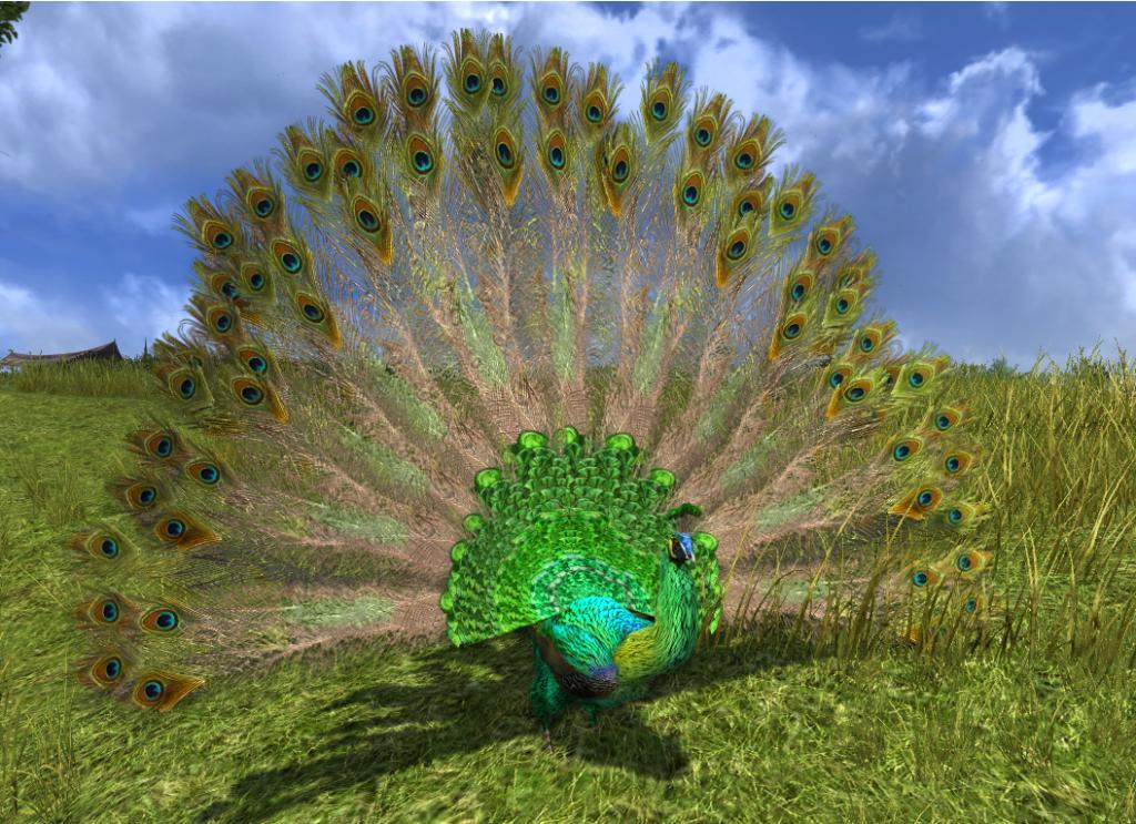 Зелёные павлины являются одними из самых крупных особей среди сородичей