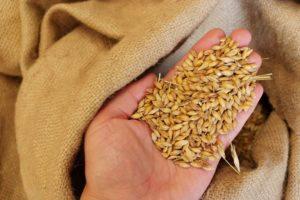 Зерно и смеси