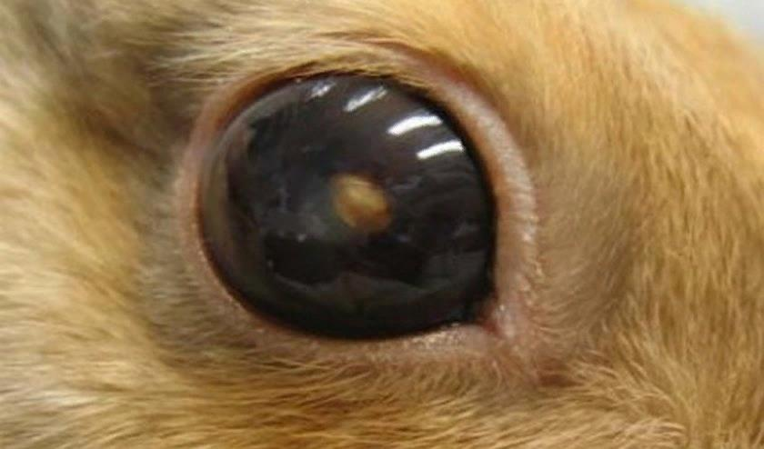 Из-за пучеглазия часто ампутируют глаза