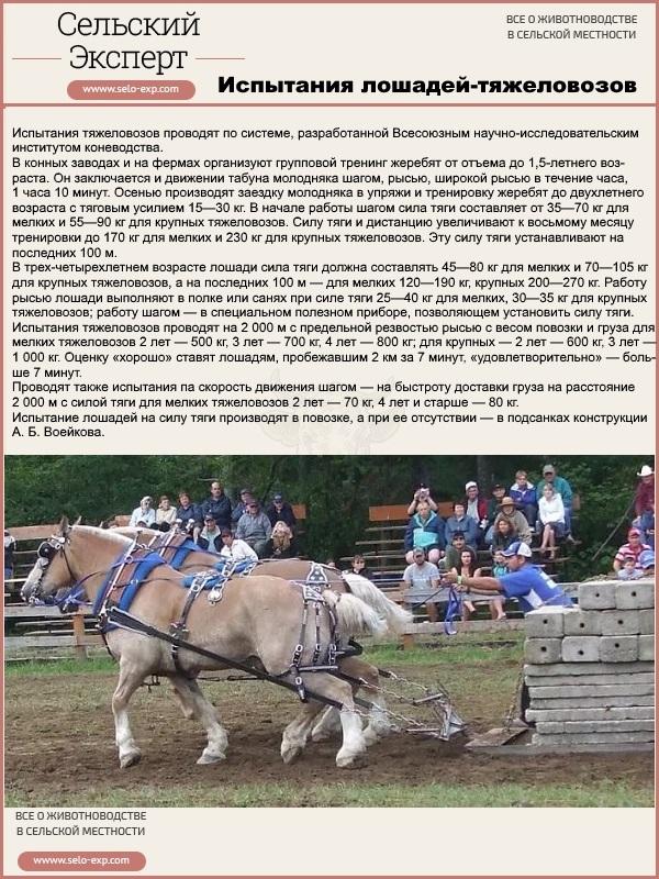 Испытания лошадей-тяжеловозов