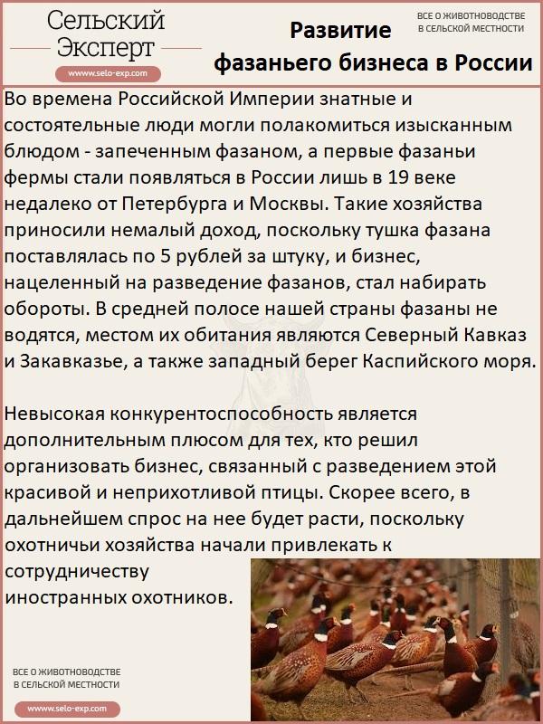 История развития фазаньего бизнеса в России