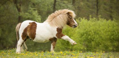 Кони-пони