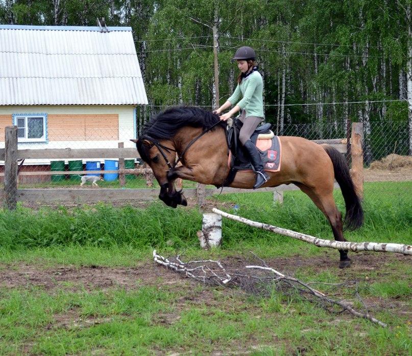 Конь беспрекословно выполняет команды хозяина