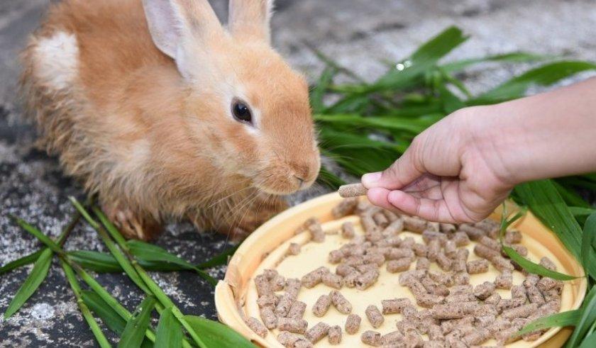 Корм для кроликов должен быть качественным