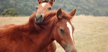 Корм для лошадей