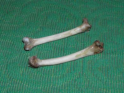 Кости для приготовления костной приманки-манка