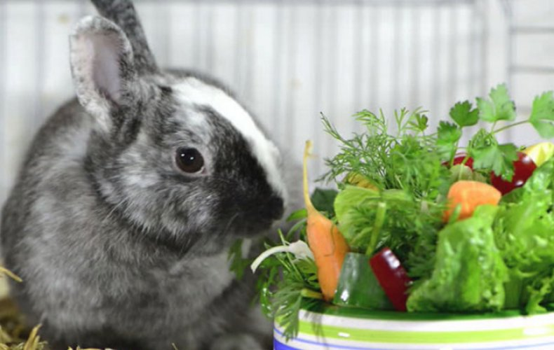 Кроликам нравятся фрукты и овощи