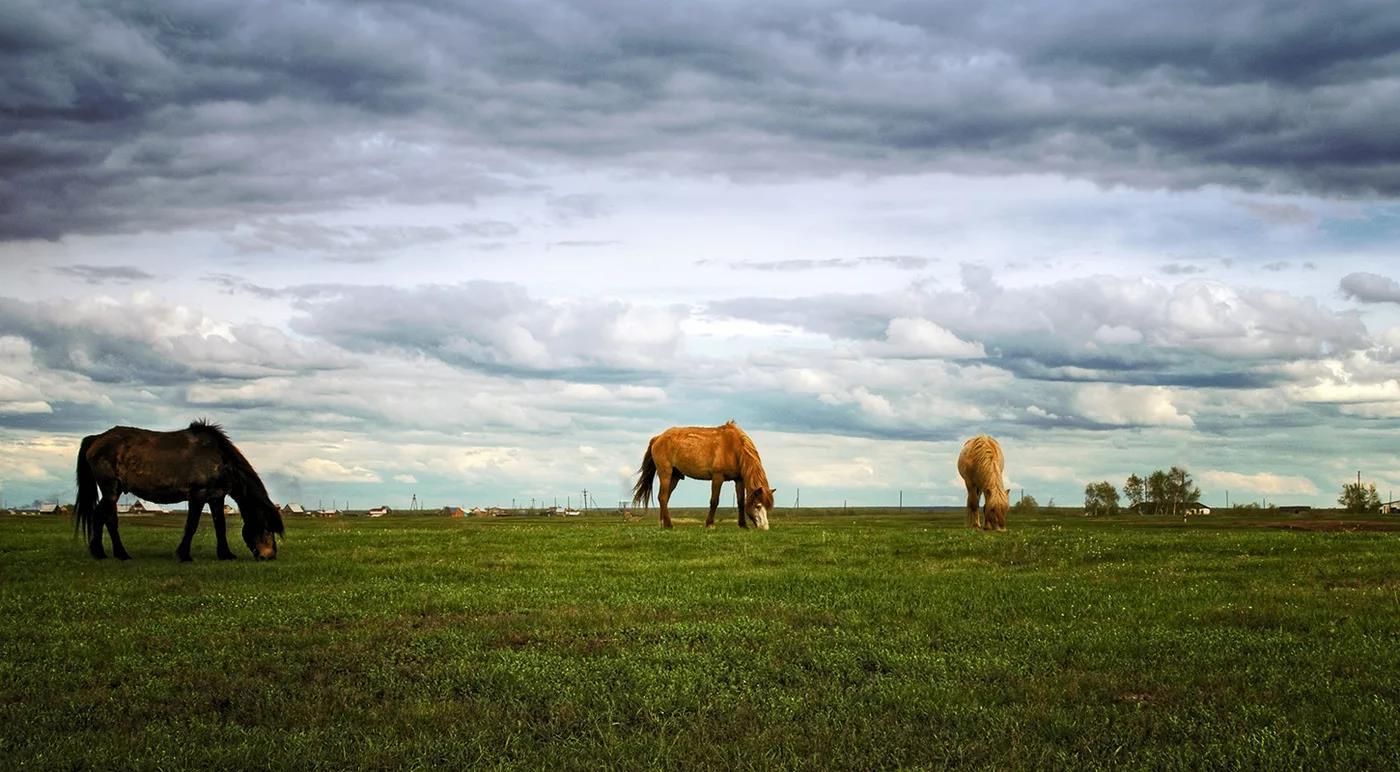 Летом лошади питаются на пастбище