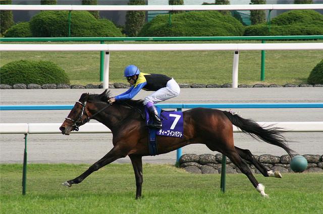 Лошадь, идущая карьером