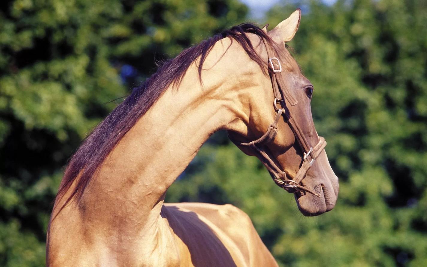 Лошадь с длинной шеей