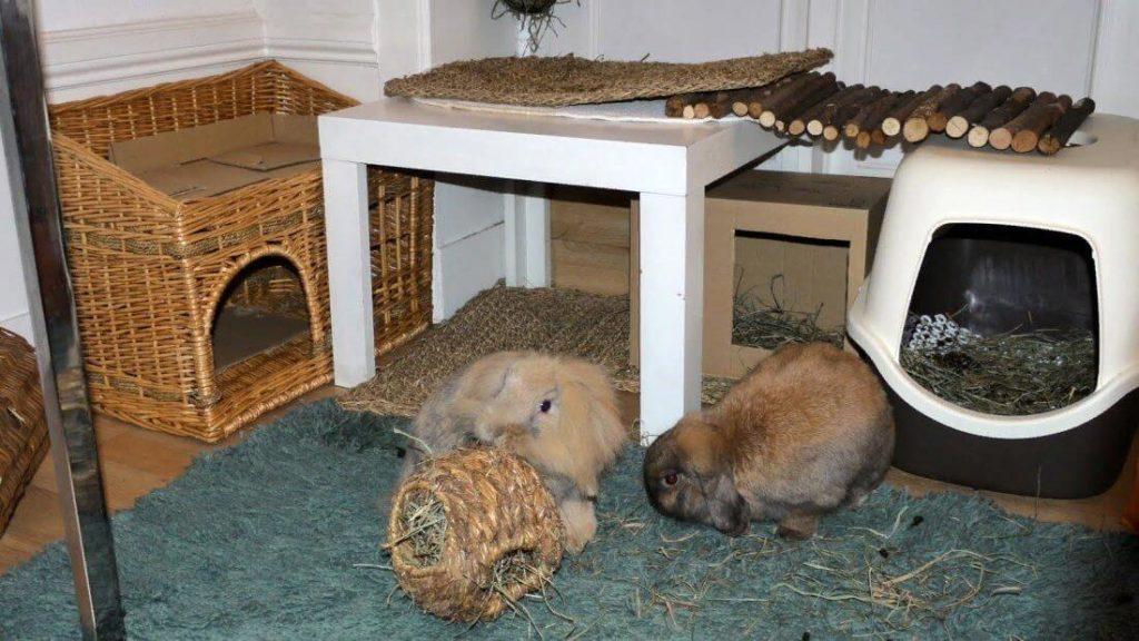 Лучше выделить для кроликов отдельное помещение