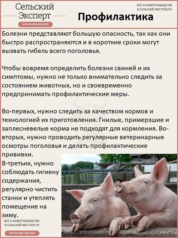 Свиной грипп H1N1 - признаки, симптомы и лечение свиного гриппа