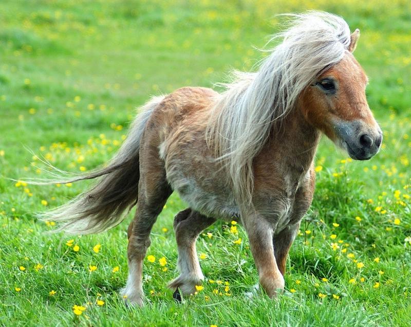Многие пони до старости выглядят, как жеребята