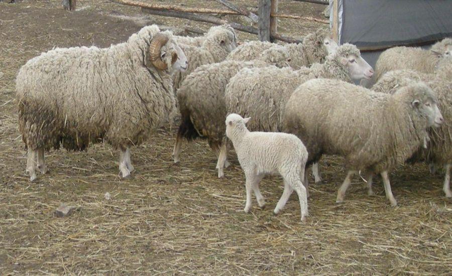 На питании племенных животных не стоит экономить, ведь они – основа будущего стада