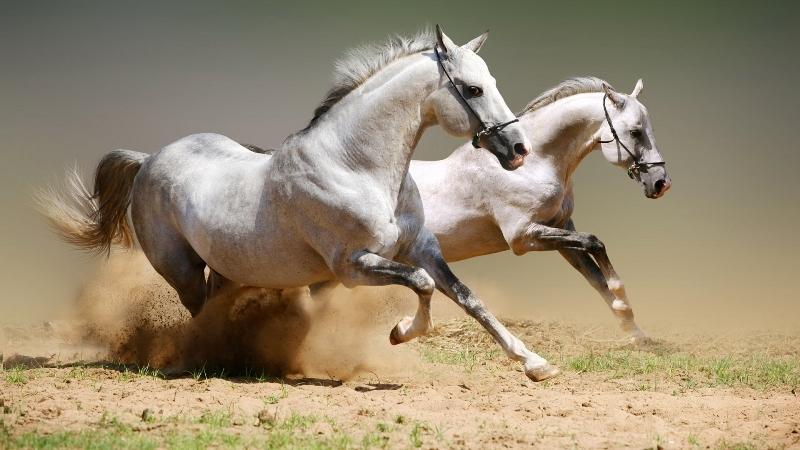 Независимо от породы, все лошади способны развить неплохую скорость