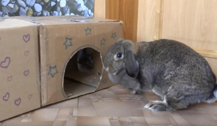 Необходимо подобрать коробку по размеру кролика. Если животное крупное, то можно соединить две коробки