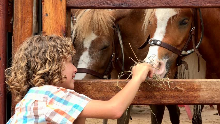 Не кормите лошадей вредными продуктами