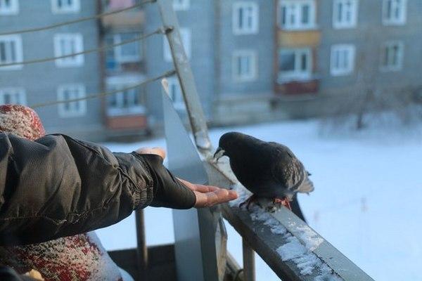 Не стоит кормить голубей на балконе, иначе избавиться от них будет сложно