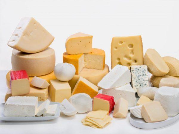 Овечье молоко используют для производства деликатесных сыров
