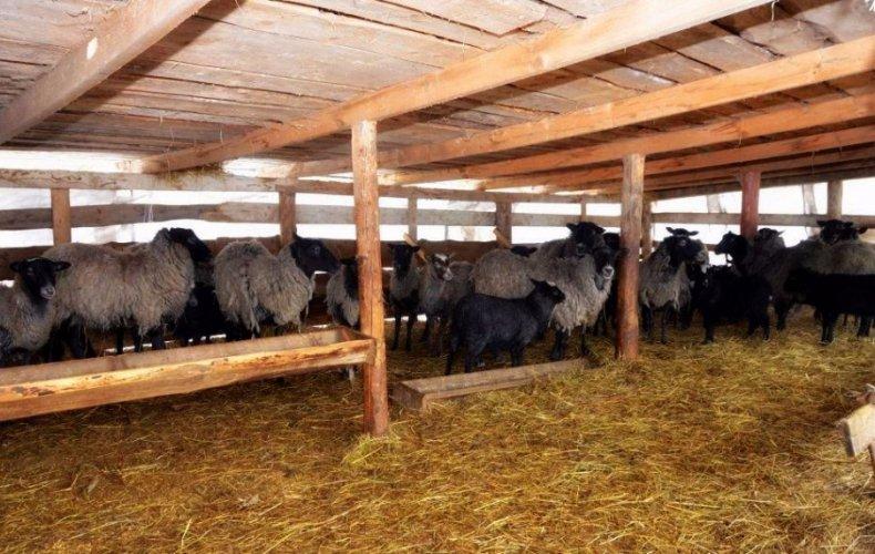 Овчарня должна быть сухой, комфортной и хорошо проветриваемой