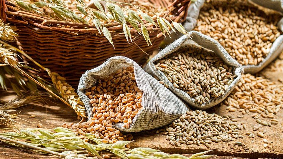 Основой комбинированных кормов выступает зерно