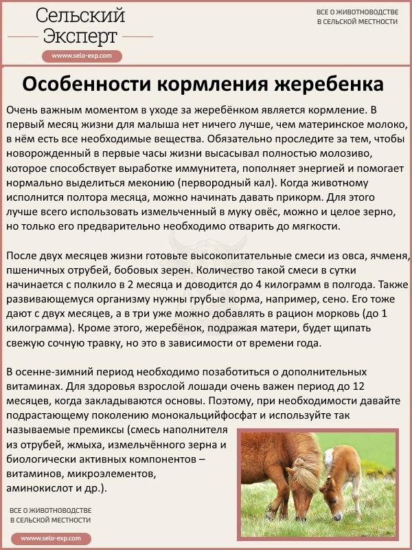 Особенности кормления жеребенка