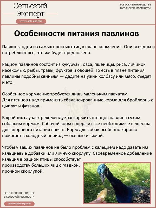 Особенности питания павлинов