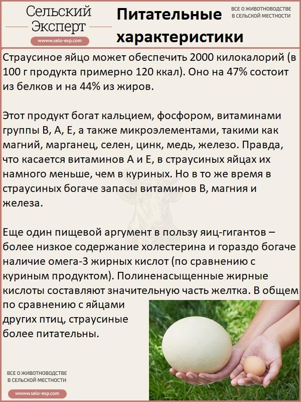 Питательные характеристики страусиного яйца