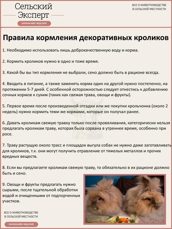 Правила кормления декоративных кроликов