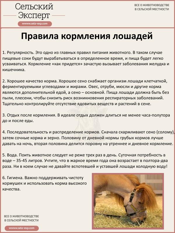 Правила кормления лошадей